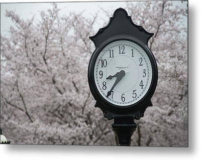 Time For Spring Metal Print by Dan Friend