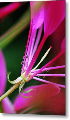 Tiny Droplets Dancing Metal Print by Lila Fisher-Wenzel
