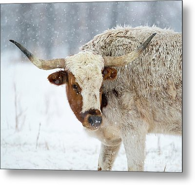 Tired Of Snow Metal Print by Mike Dawson