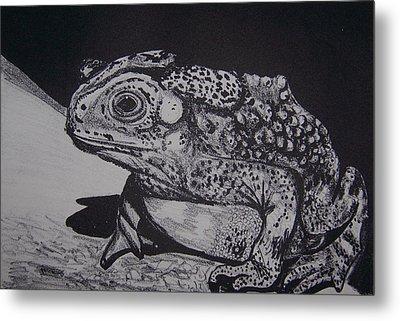 Toad Metal Print by Jude Labuszewski