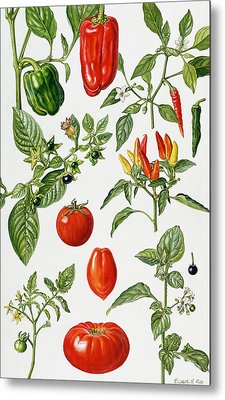 Tomatoes And Related Vegetables Metal Print