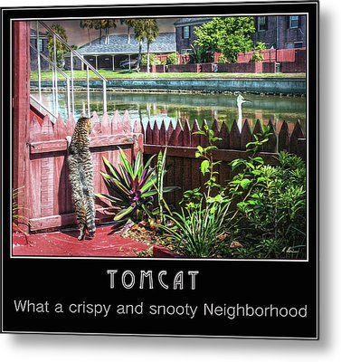 Metal Print featuring the photograph Tomcat Breakfast by Hanny Heim