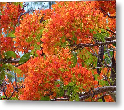 Totally Orange Metal Print by Jeanette Oberholtzer