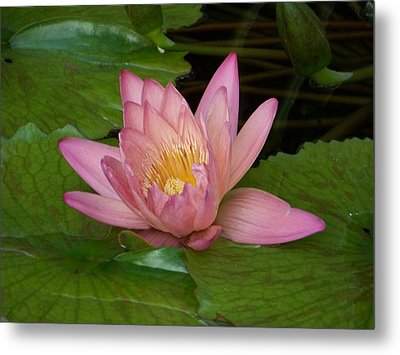 Touch Of Pink Metal Print by Karen Wiles