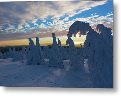 Touched From The Winter Sun Metal Print