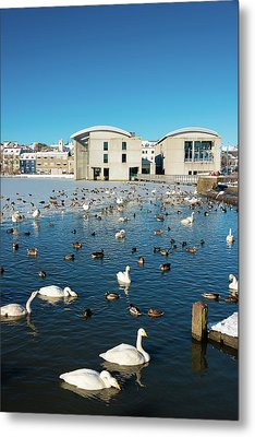 Town Hall And Swans In Reykjavik Iceland Metal Print by Matthias Hauser