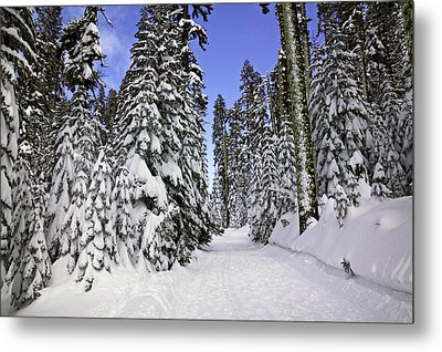 Trail Through Trees Metal Print
