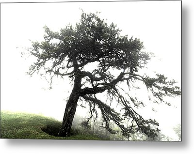 Metal Print featuring the photograph Tree by Alex Grichenko