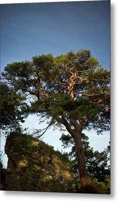 Tree At Maccarthy Mor Castle Metal Print by Douglas Barnett