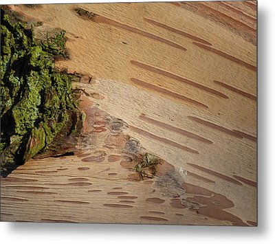 Tree Bark With Lichen Metal Print by Margaret Brooks