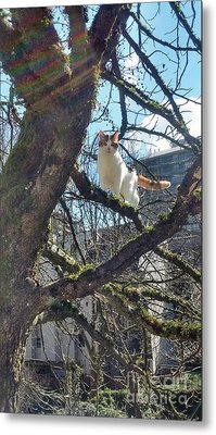 Metal Print featuring the photograph Tree Climber by Bill Thomson