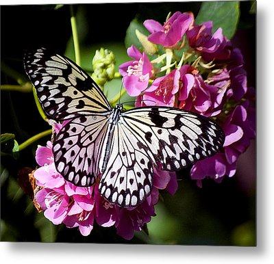 Tree Nymph Butterfly Metal Print