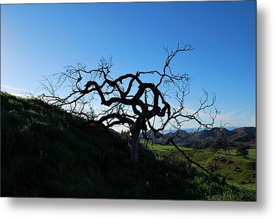 Metal Print featuring the photograph Tree Of Light - Landscape by Matt Harang