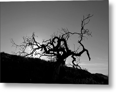 Metal Print featuring the photograph Tree Of Light Silhouette Hillside - Black And White  by Matt Harang