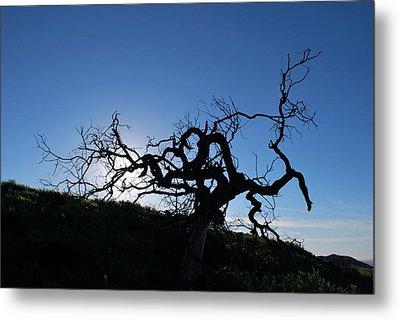 Metal Print featuring the photograph Tree Of Light Silhouette Hillside by Matt Harang