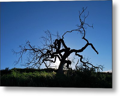 Metal Print featuring the photograph Tree Of Light - Straight View 2 by Matt Harang