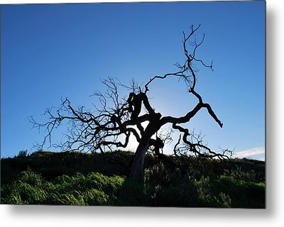 Metal Print featuring the photograph Tree Of Light - Straight View by Matt Harang