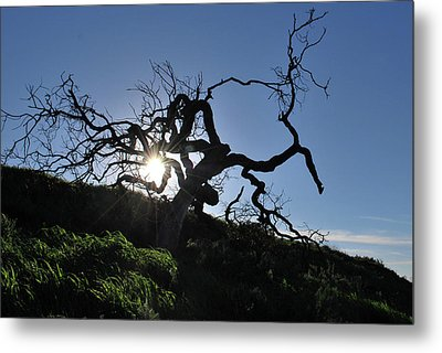 Metal Print featuring the photograph Tree Of Light - Sunshine Through Branches by Matt Harang