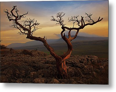 Tree On Top Of Hill Of  Yorkshire Dales Metal Print