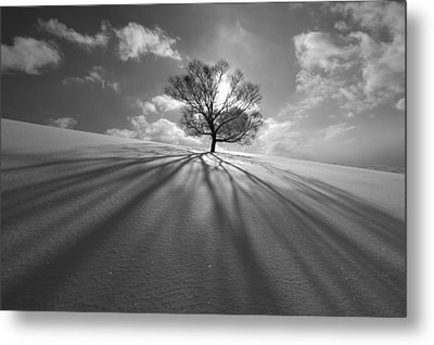 Tree Shadow Metal Print by Kengo Shibutani