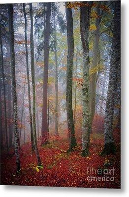 Tree Trunks In Fog Metal Print