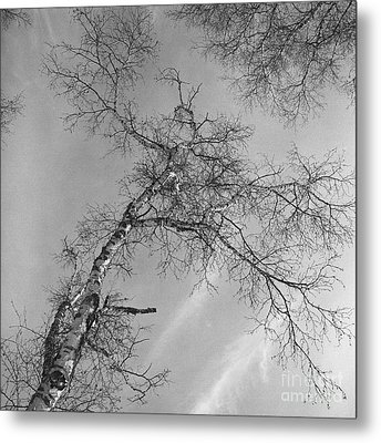 Trees Against Winter Metal Print by Arni Katz