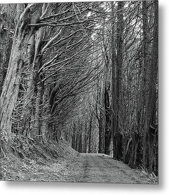 Trees Along Sandymount Track, New Zealand Metal Print
