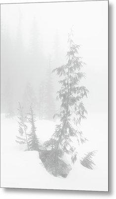 Trees In Fog Monochrome Metal Print