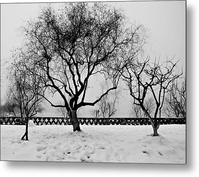 Trees In Winter Metal Print by Dean Harte