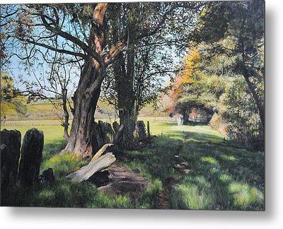 Trees Near Rhug. Metal Print by Harry Robertson