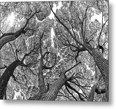 Metal Print featuring the photograph Trees by Vladimir Kholostykh