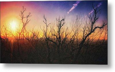 Treetop Silhouette - Sunset At Lapham Peak #1 Metal Print by Jennifer Rondinelli Reilly - Fine Art Photography
