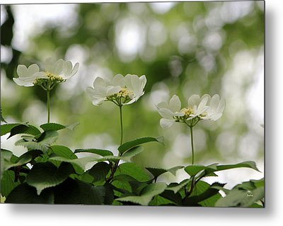 Triplets Metal Print by Deborah  Crew-Johnson