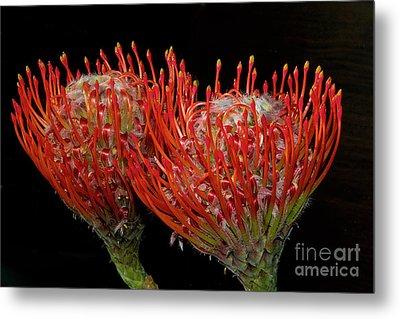 Tropical Flower Metal Print by Elvira Ladocki