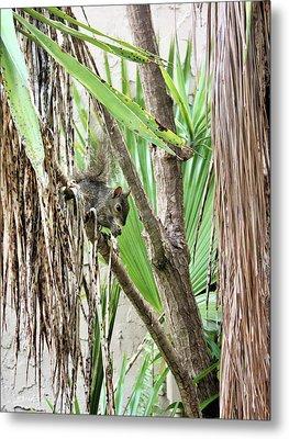 Tropical Squirrel Metal Print