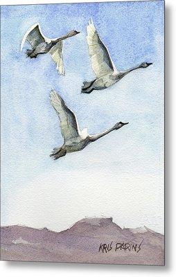 Trumpeter Swan Study Metal Print by Kris Parins