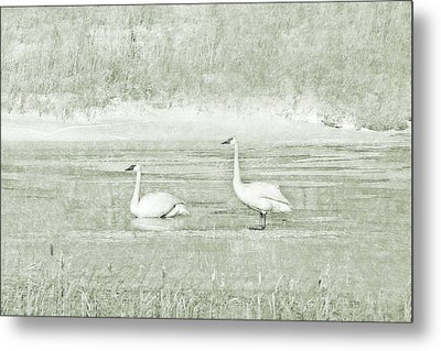Metal Print featuring the photograph Trumpeter Swan's Winter Rest Green by Jennie Marie Schell