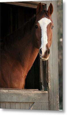T's Window Metal Print by Angela Rath