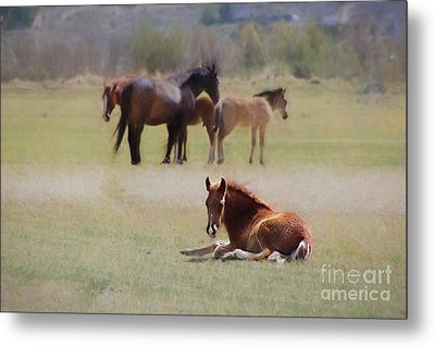 Metal Print featuring the photograph Tuckered Out by Benanne Stiens