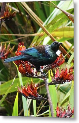 Tui In Flax Metal Print