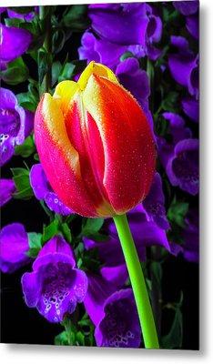 Tulip And Foxglove Metal Print