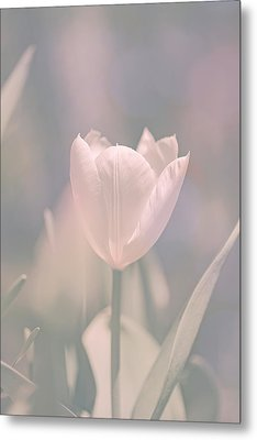 Metal Print featuring the photograph Tulip by Bob Orsillo