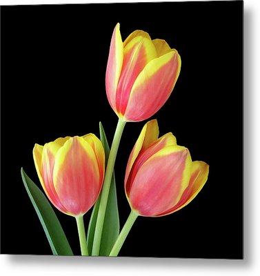 Tulip Passion Metal Print