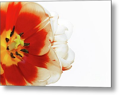 Tulip Statement Metal Print