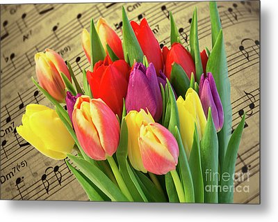 Tulips And Music Metal Print by Steve Purnell