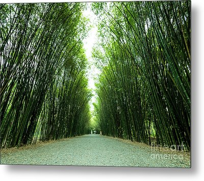 Tunnel Bamboo Trees And Walkway. Metal Print by Tosporn Preede