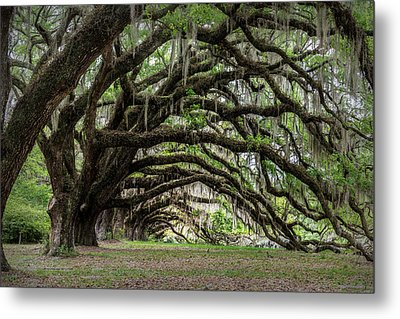 Metal Print featuring the photograph Tunnel In Charleston by Jon Glaser