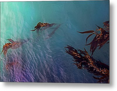 Turquoise Current And Seaweed Metal Print