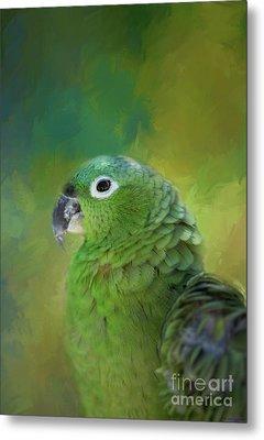 Turquoise-fronted Amazon Metal Print