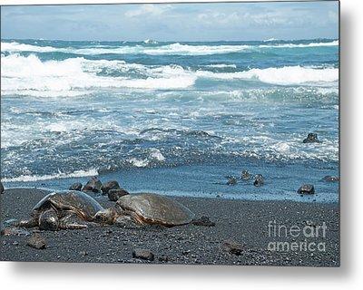 Turtles On Black Sand Beach Metal Print